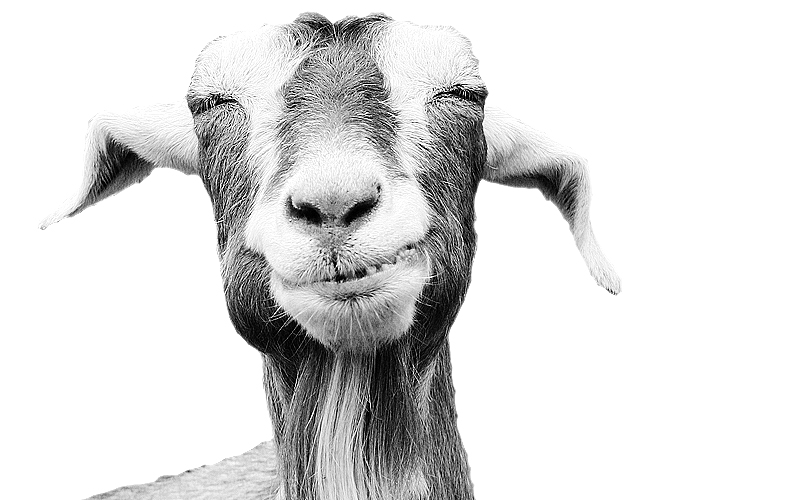 Goals-Goats-strategic-SMART-goals 2 (Demo)